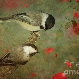 Black-capped Chickadees by Chantal Proulx