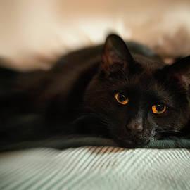 Black Cat - Gold Eyes by Joann Vitali