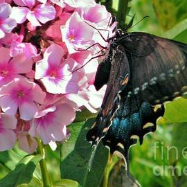Black Swallowtail Butterfly              August            Indiana by Rory Cubel