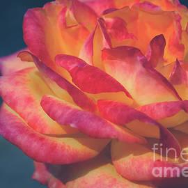 Blazing Rose by Neha Gupta