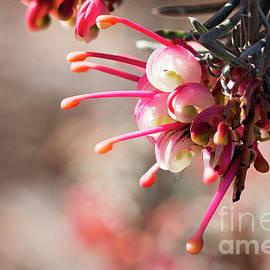 Bloomin Aussie by Linda Lees