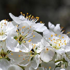 Blossom Love by Joy Watson