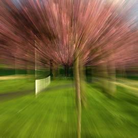 Blossom speedy too by Clive Beake