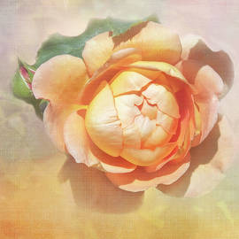 Blossoming Rose by Terry Davis