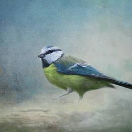 Blue Bird by Terry Davis