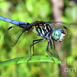 Davids Digits - Blue Dragonfly