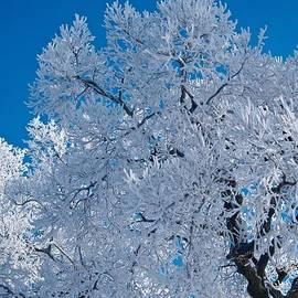 Blue Frost by Jason Layden