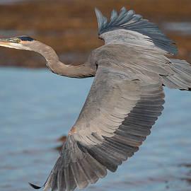 Blue Heron Surprise by Loree Johnson
