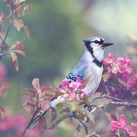 Blue Jay by Kay Jantzi