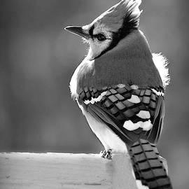 I Feel Pretty in Black and White by Marilyn DeBlock