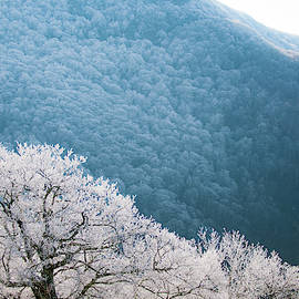 Blue Ridge Hoarfrost by Mark Duehmig