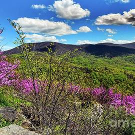 Blue Ridge Spring 3 by Broken Soldier