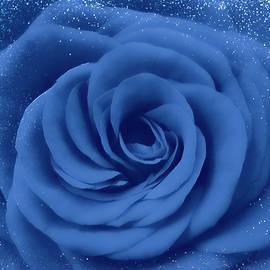 Blue Rose With Snow by Johanna Hurmerinta