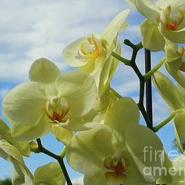 Blue Skies and Yellow Orchids by Dora Sofia Caputo Photographic Design and Fine Art