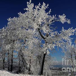 Blue Skies In Winter by Lois Bryan