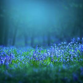Bluebells flowers by Svetlana Sewell