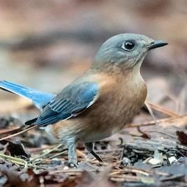 Bluebird Camouflage by Mary Ann Artz
