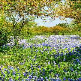 Bluebonnet Heaven by Gary Richards