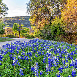 Bluebonnets in the Texas Hill Country by Bee Creek Photography - Tod and Cynthia