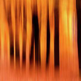 Blurred Lines - Autummn Impressions by Roeselien Raimond
