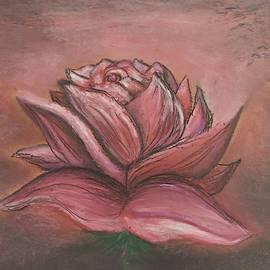 Blush Red Rose by Lisa Bunsey