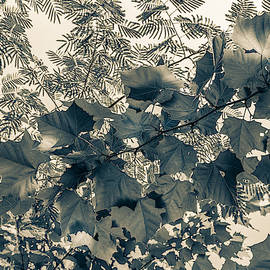 Bnw Leaves  by Keith Smith