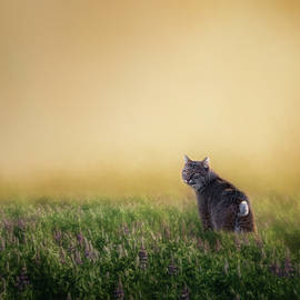 Bobcat Eyes Square by Bill Wakeley