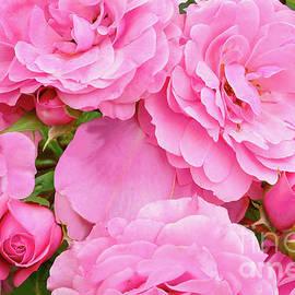 Bonica Rose Bush Blossoms by Regina Geoghan