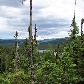 Boreal Forest by Rose Wark