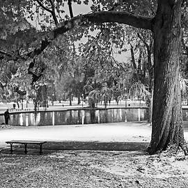 Boston Snowfall In The Boston Public Garden Boston Ma Autumn Tree Black And White by Toby McGuire