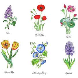 Botanical Watercolor Flowers Collection Vi by Irina Sztukowski