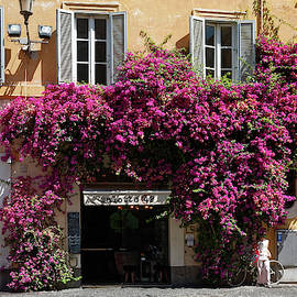 Bougainvillea Over Building by Sally Weigand