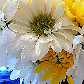 Bouquet of Daisies by Arlane Crump