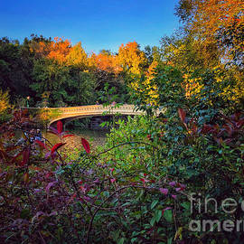 Bow Bridge - Fall Foliage Central Park New York by Miriam Danar