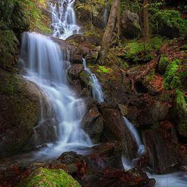 Brace Mountain Trail Falls by Bill Wakeley