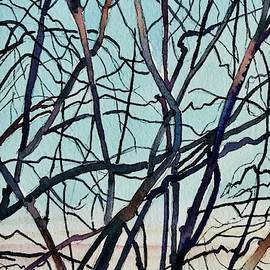 Branches - Santa Monica Mountains by Luisa Millicent