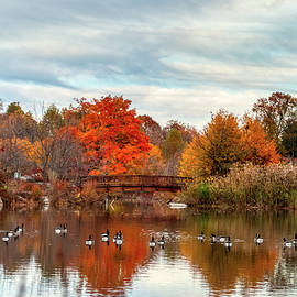 Bridge Over The Pond by Mark Dodd