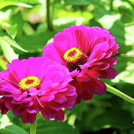 Bright And Beautiful Flowers by Cynthia Guinn