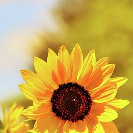 Bright As The Sun - Tillamook - Oregon by Beautiful Oregon
