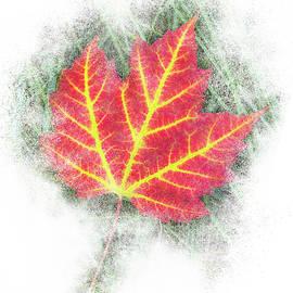 Bright Autumn Leaf by Patti Deters