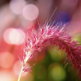Bright, Beautiful Grass by Terry Davis