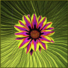 Bright Gazania With Palm Fronds by Claudia O'Brien
