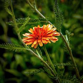 Bright Orange #i9 by Leif Sohlman