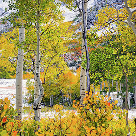 Brilliant Autumn by Leland D Howard