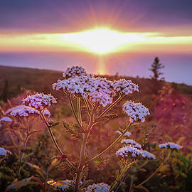 Brockway Mountain Wildflower Sunset by Amanda Cook