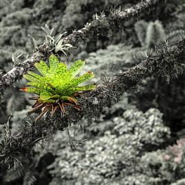 Bromeliads in the rainforest by Alexey Stiop