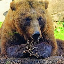 Brown Bear by Lisa Wooten