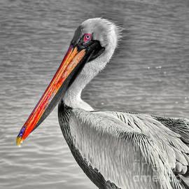 Brown Pelican Orange Beak by Janice Pariza