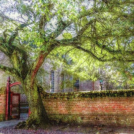 Colonial Williamsburg Live Oak at Bruton Parish Church by Marilyn DeBlock