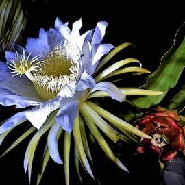 Bud Flower Fruit by Heidi Fickinger